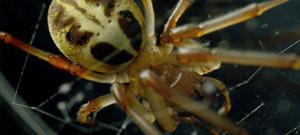 Spider & Roach Macro Test